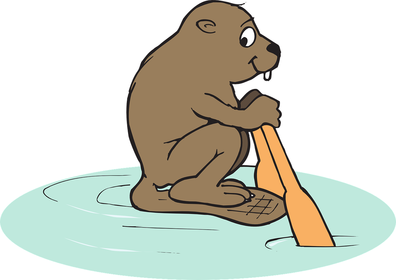 water,beaver,animal,travel,rowing,row,free vector graphics,free pictures, free photos, free images, royalty free, free illustrations, public domain