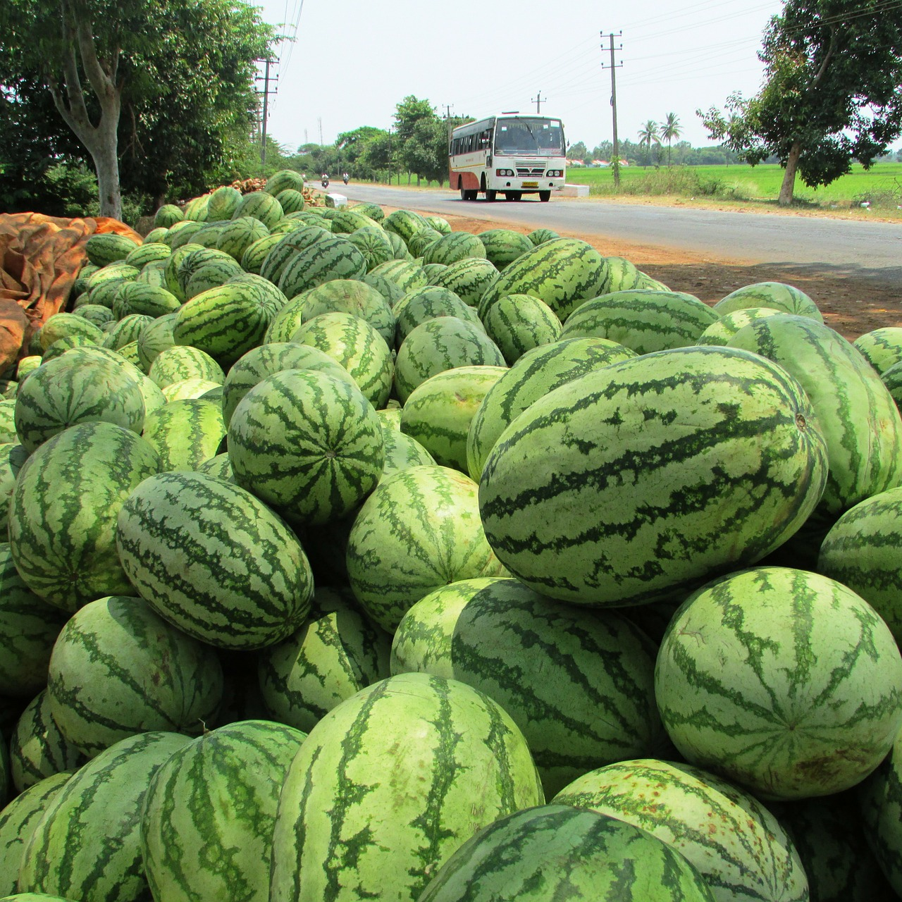 watermelon melon citrullus lanatus free photo