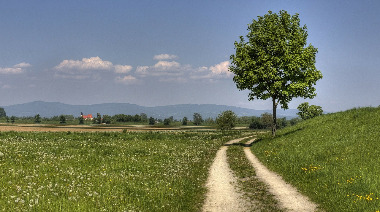way to the dam nature bavarian forest free photo
