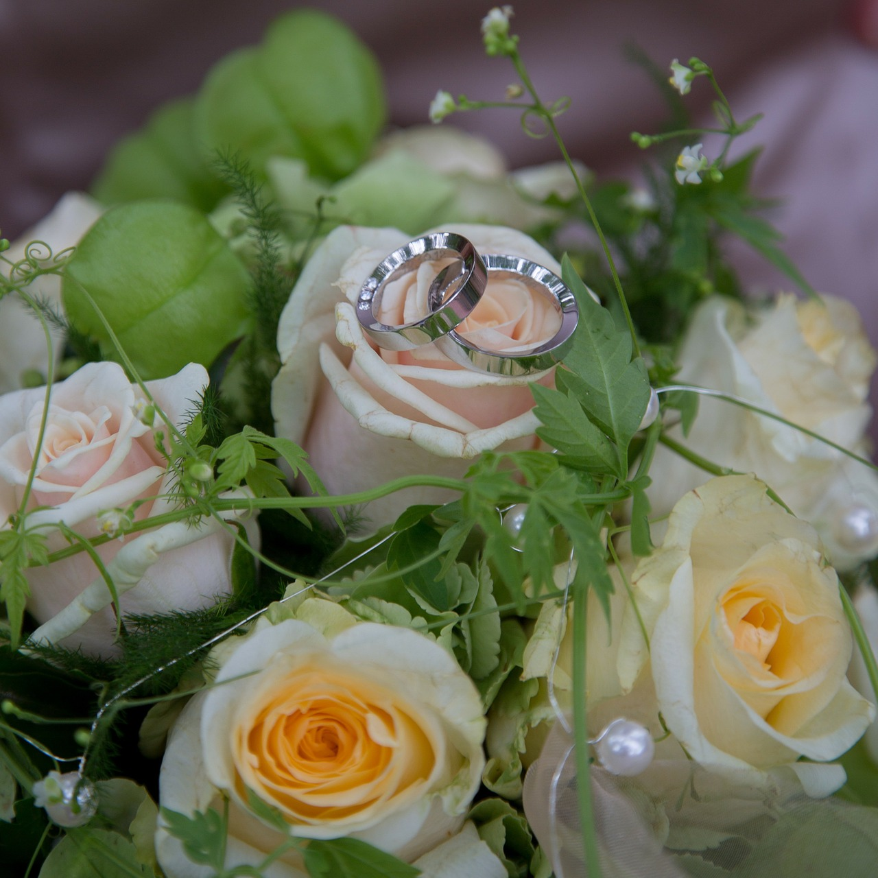 wedding roses rings free photo