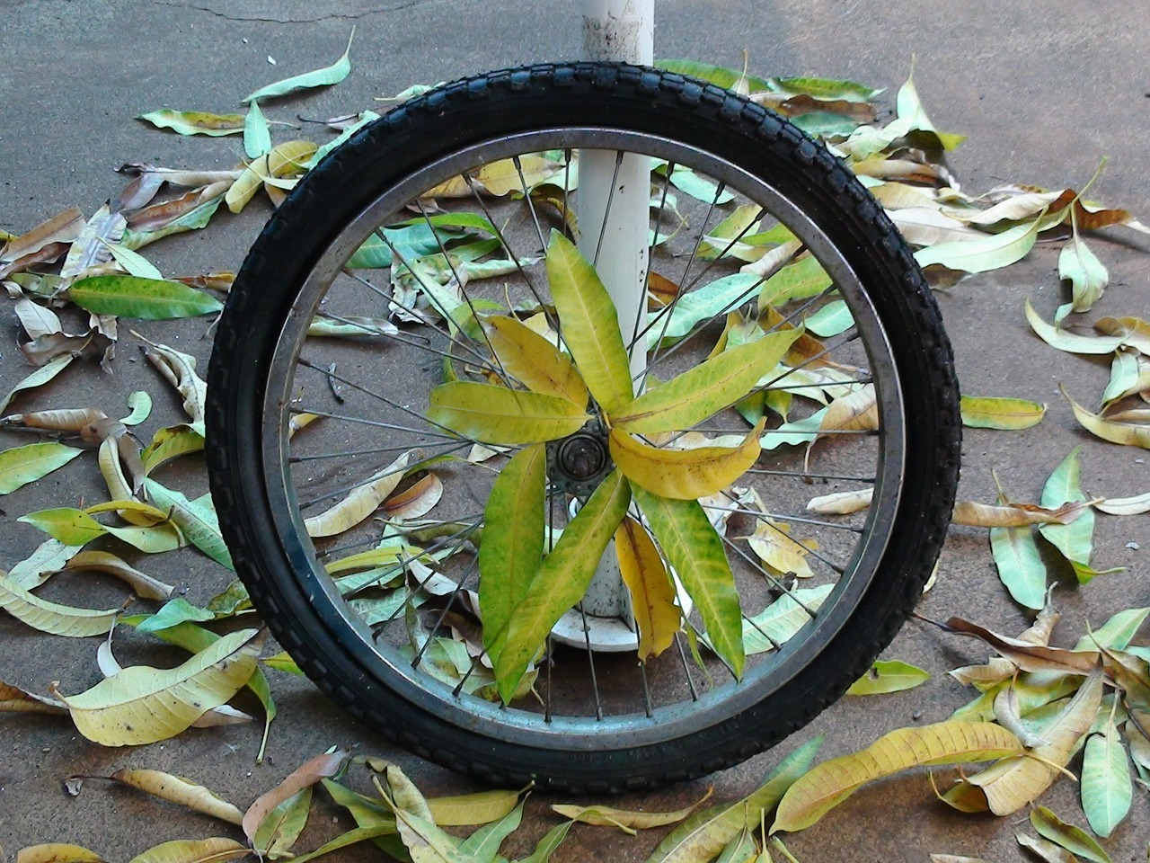 wheel,bike,stolen,tire,bike tire,leaves,rim,spokes,free pictures, free photos, free images, royalty free, free illustrations, public domain