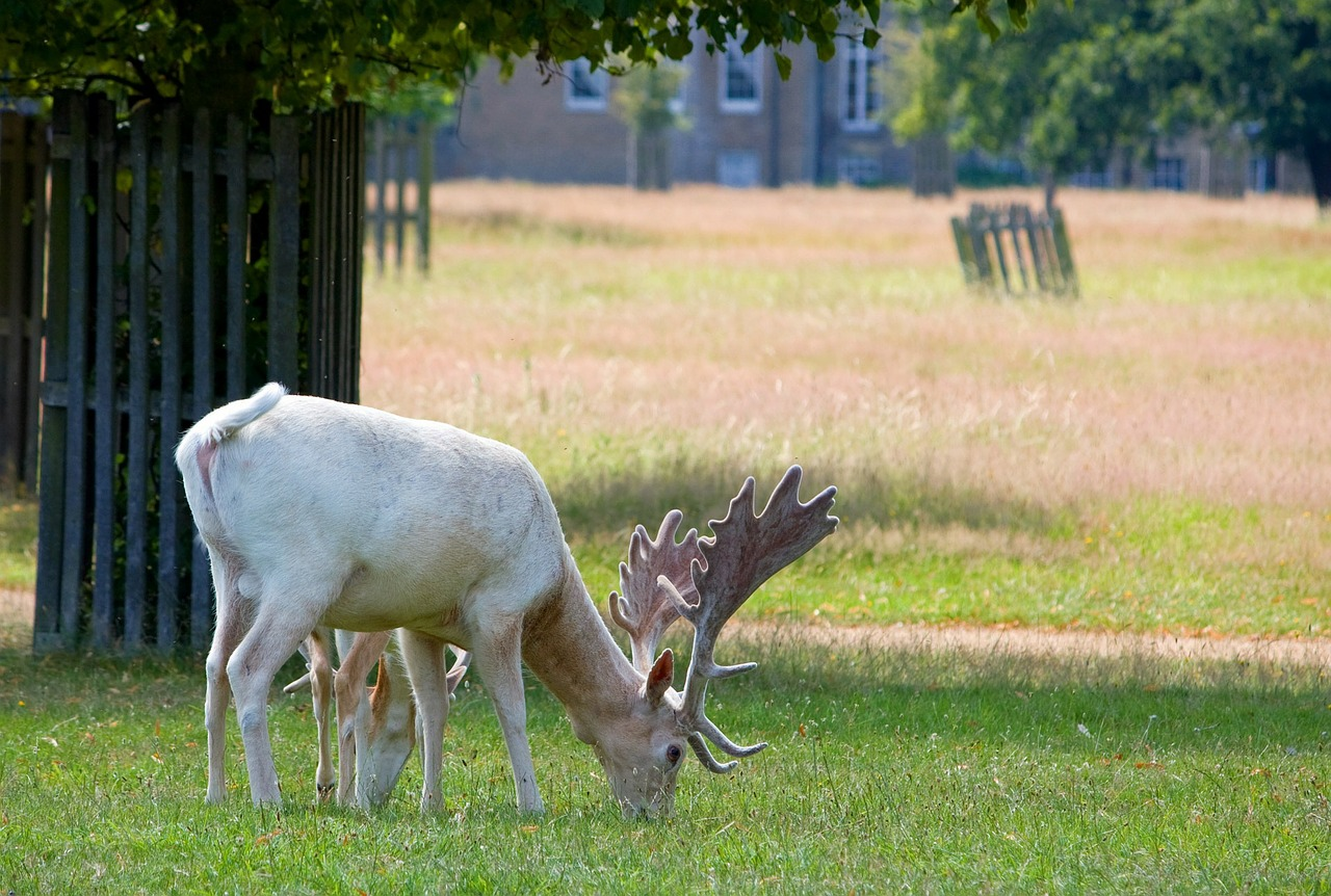 white deer stage free photo