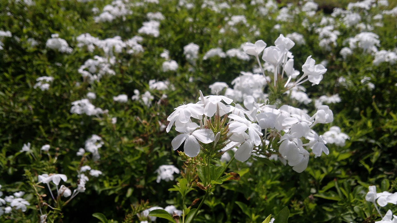 white flower plant free photo