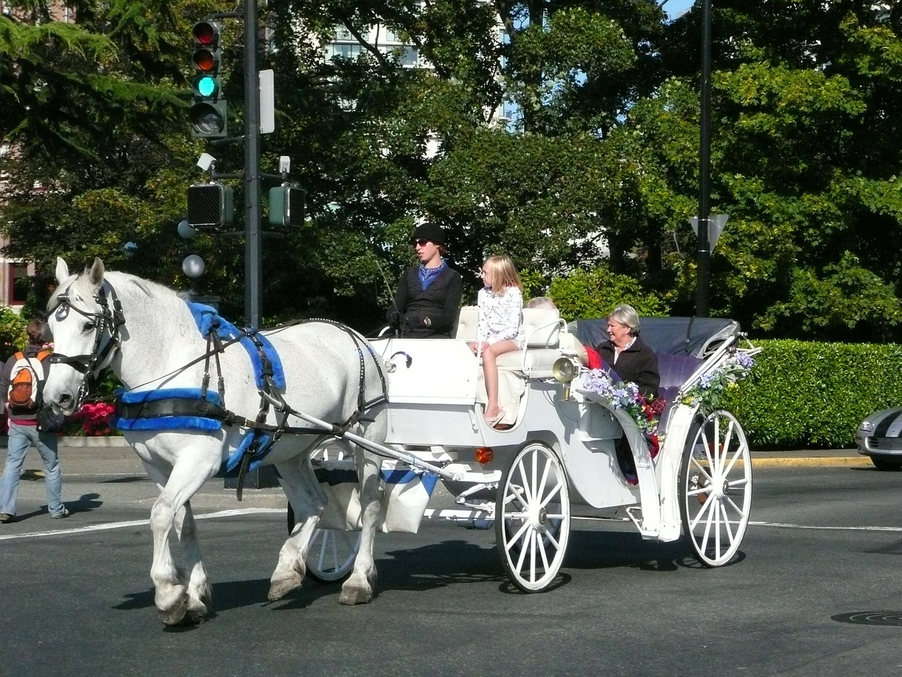 white coach horses free photo