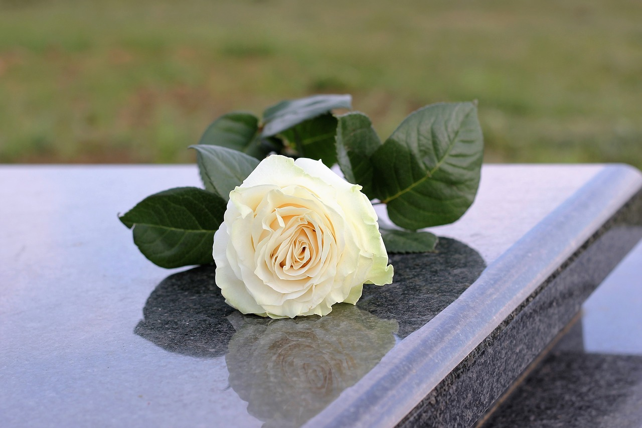 Download free photo of White rose,purity,grey marble,gravestone,grave - from needpix.com