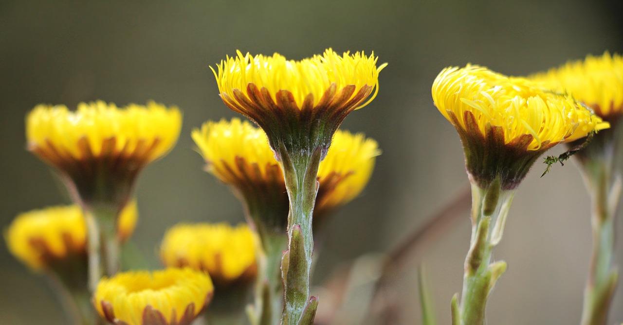 Wild Flowersyellowyellow Wild Flowersnaturewildflowers Free