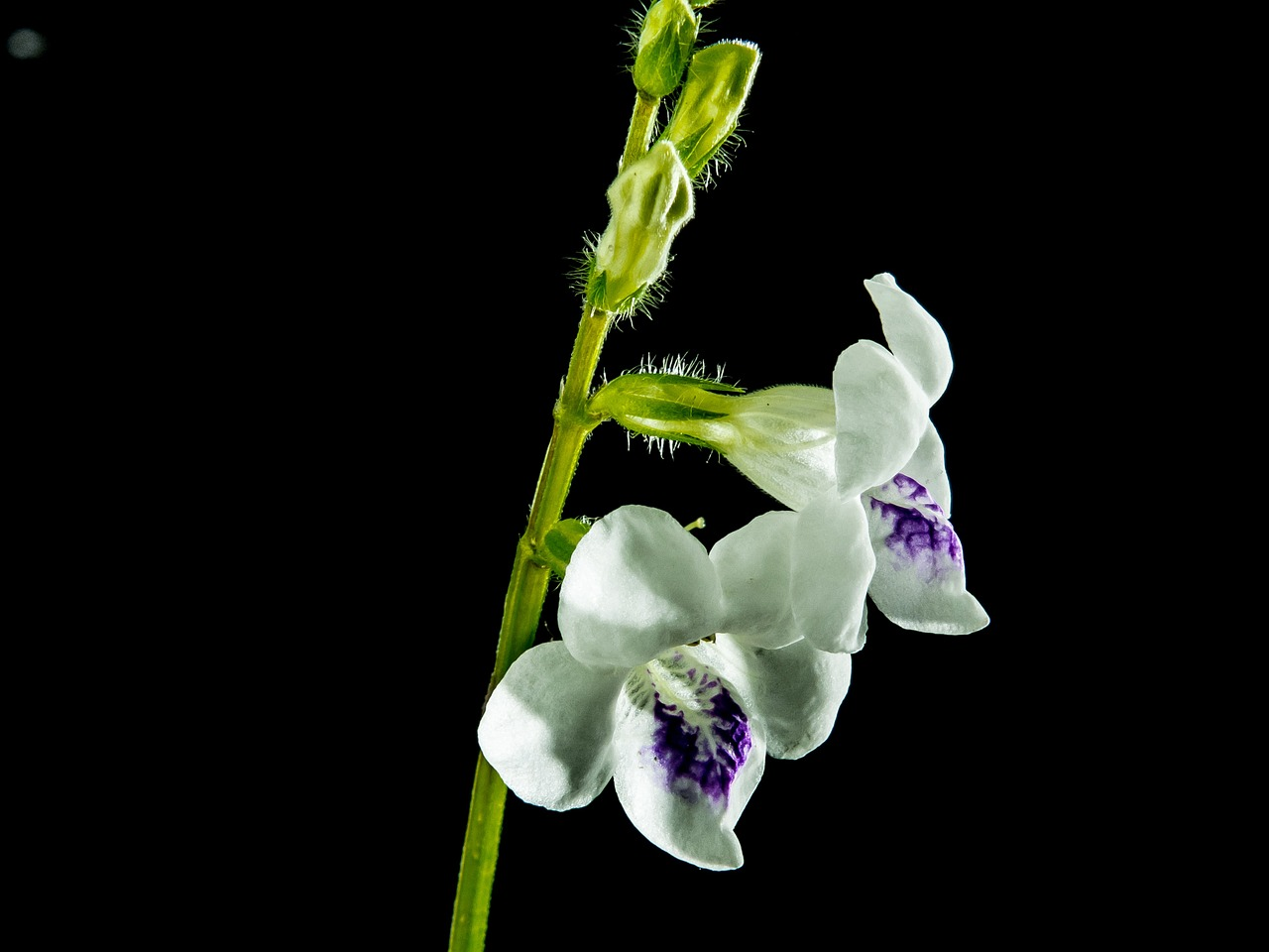 wild orchid blossom bloom free photo