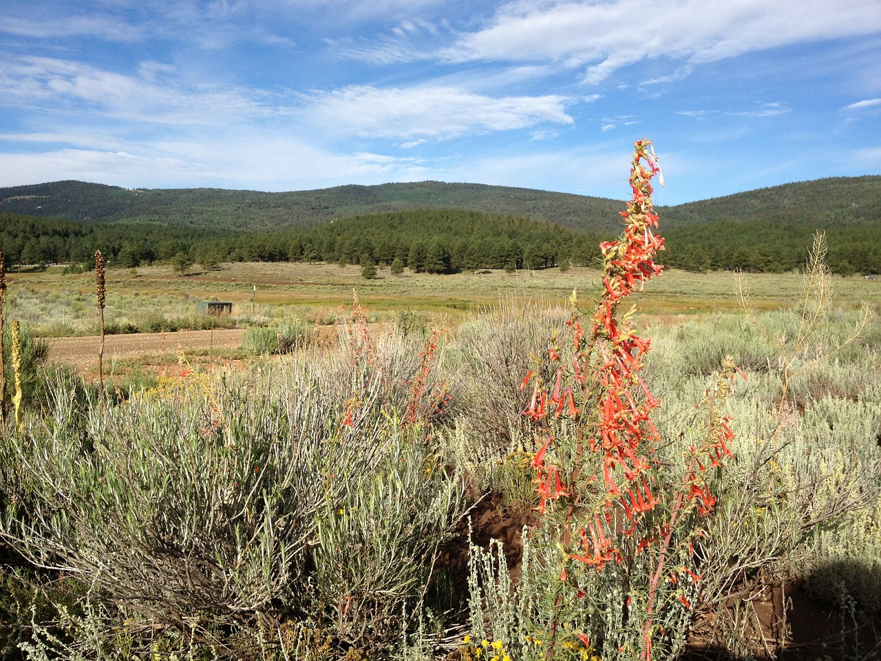 wildflowers high desert wilderness free photo
