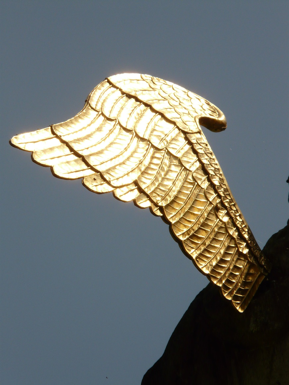 wing angel gold free photo