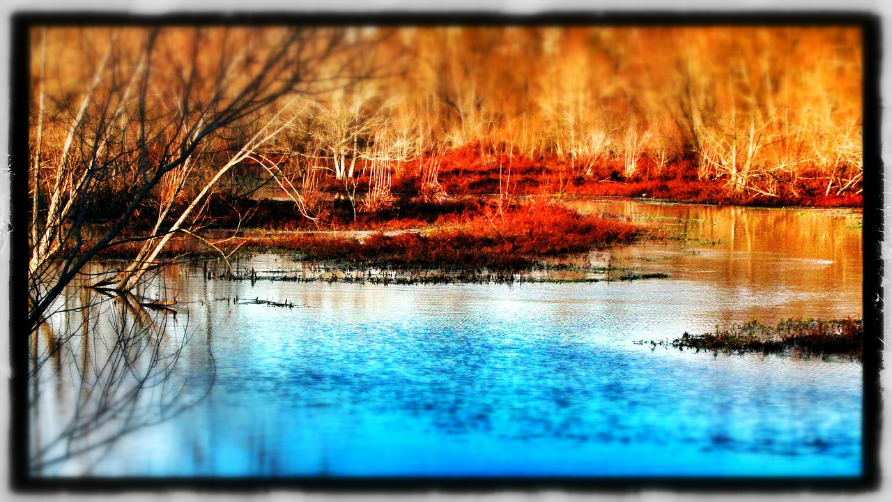 winter water swamp free photo
