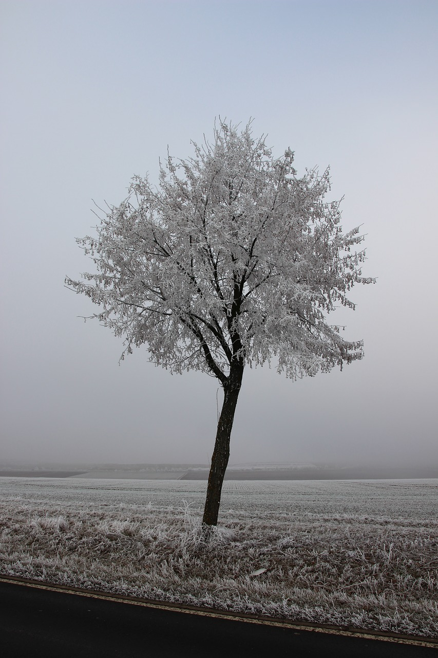 winter ice tree free photo