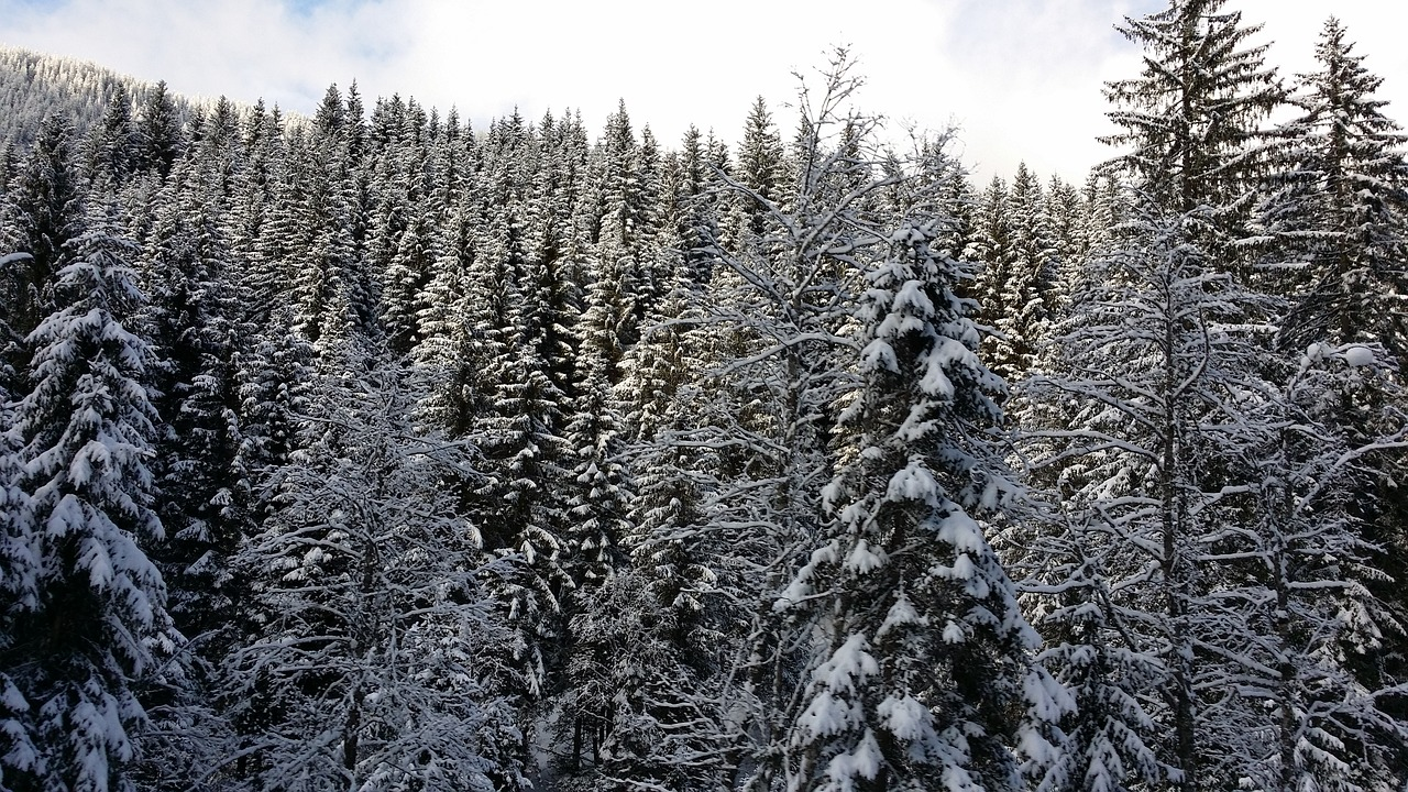 Winter Austria Trees Free Pictures Free Photos Free Photo From