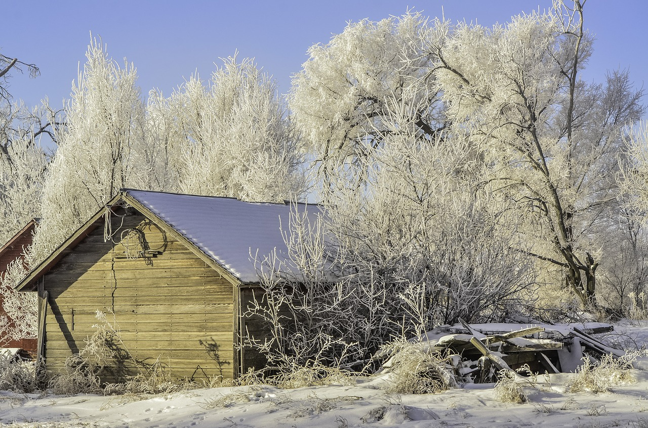 winter old shed hoarfrost free photo