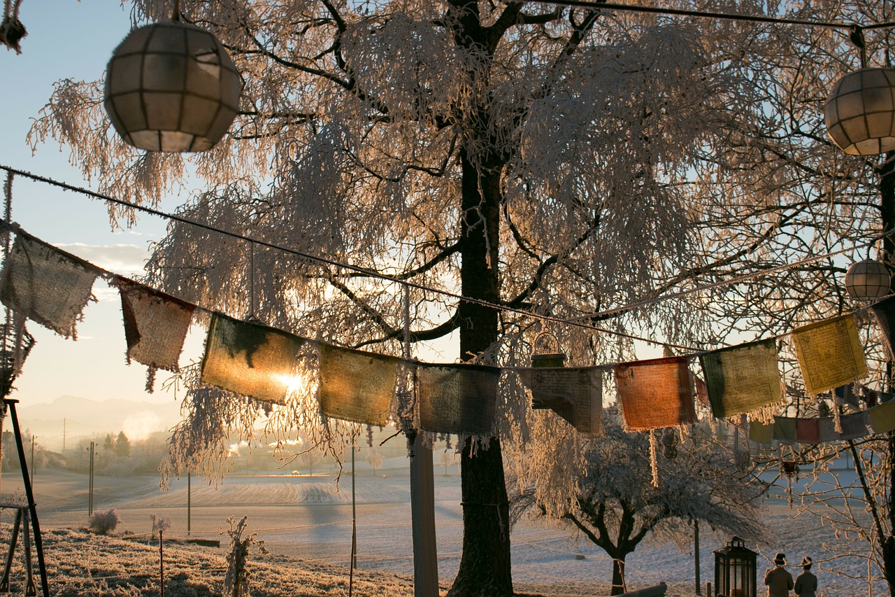 winter frozen morning free photo