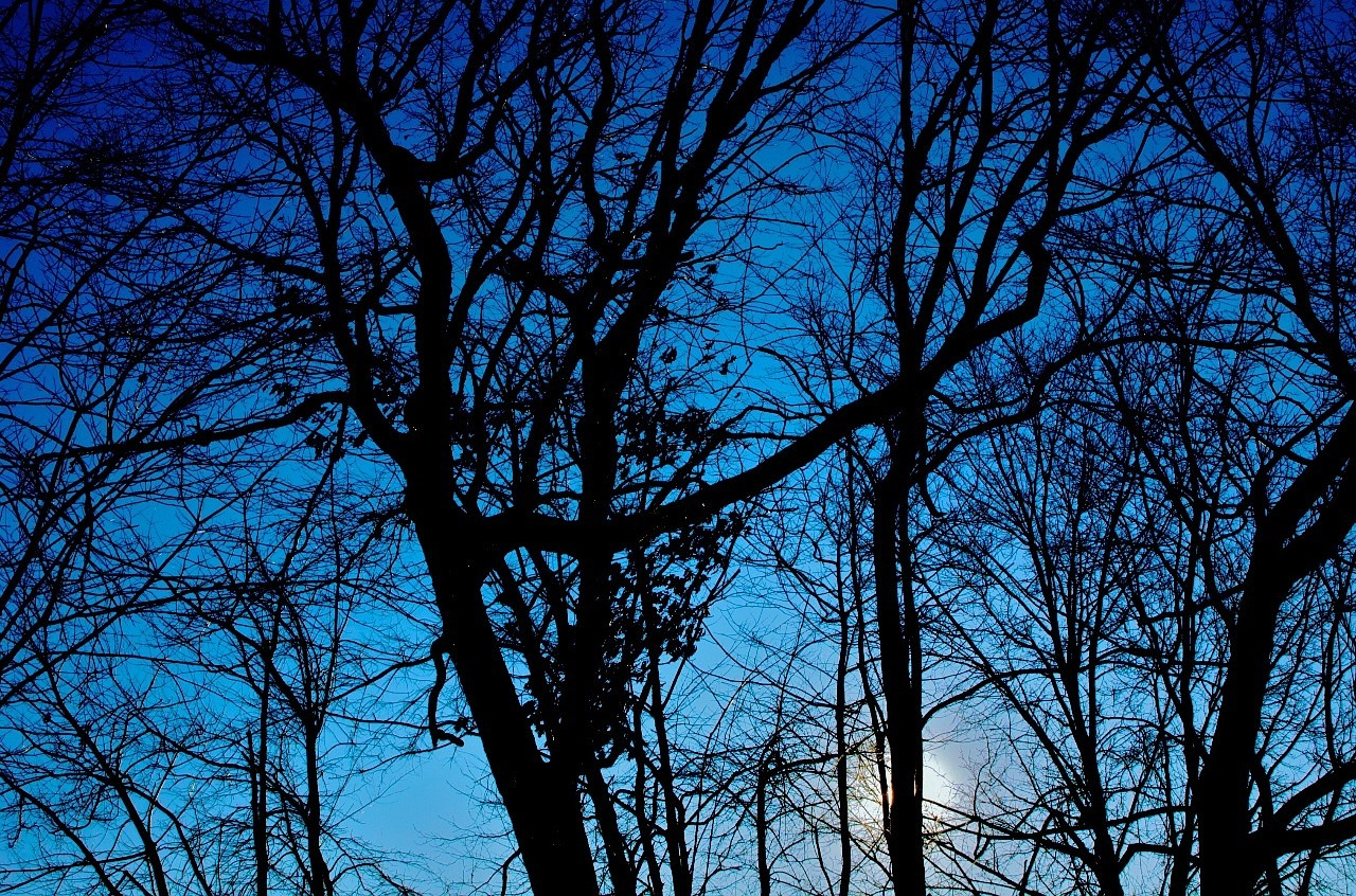 winter trees silhouette free photo