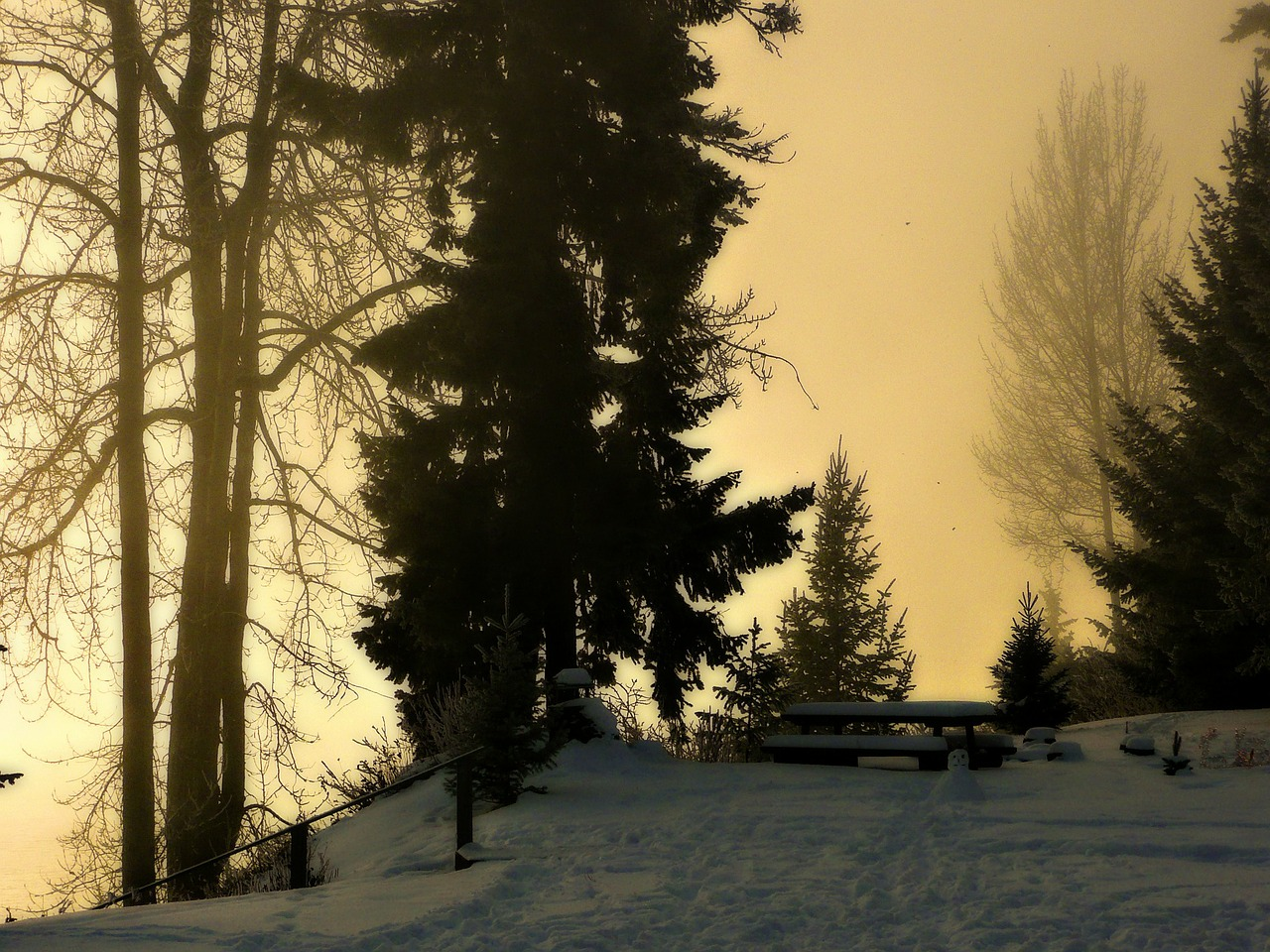 winter,morning,foggy,trees,snow,scene,sunrise,free pictures, free photos, free images, royalty free, free illustrations, public domain