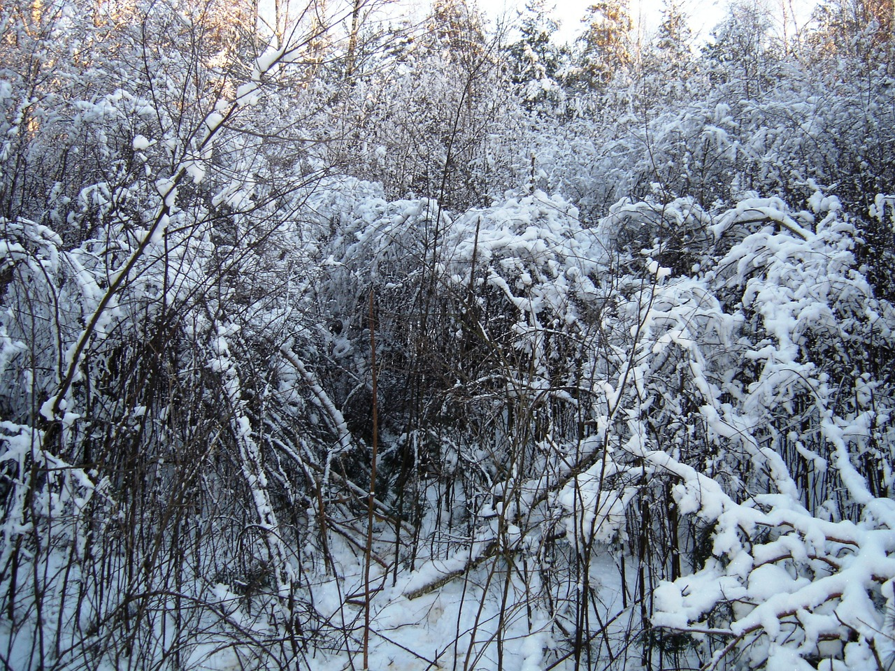 winter shrubs plein air free photo