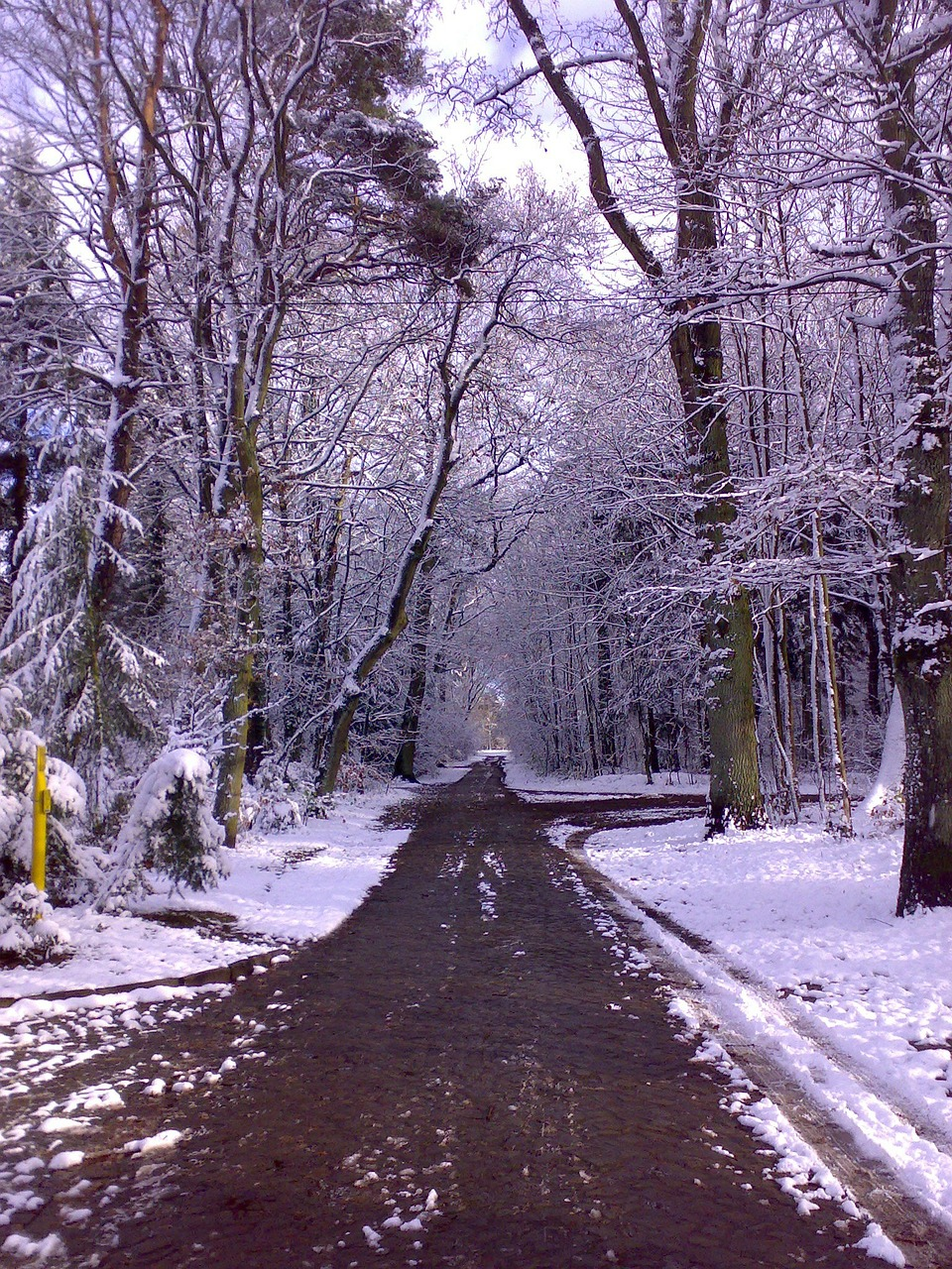 winter forest away winter magic free photo