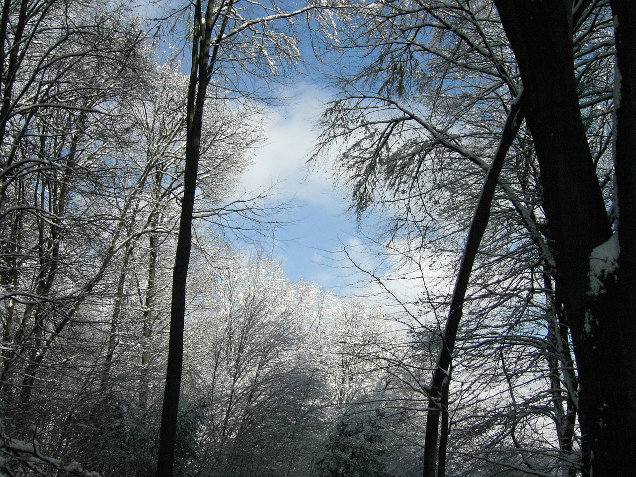 winter sky forest trees free photo