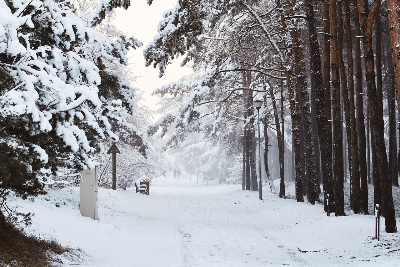 wintry way  snowy way  forest way free photo