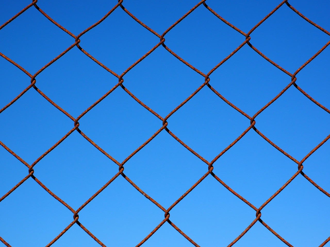 wire mesh wire mesh fence fence free photo