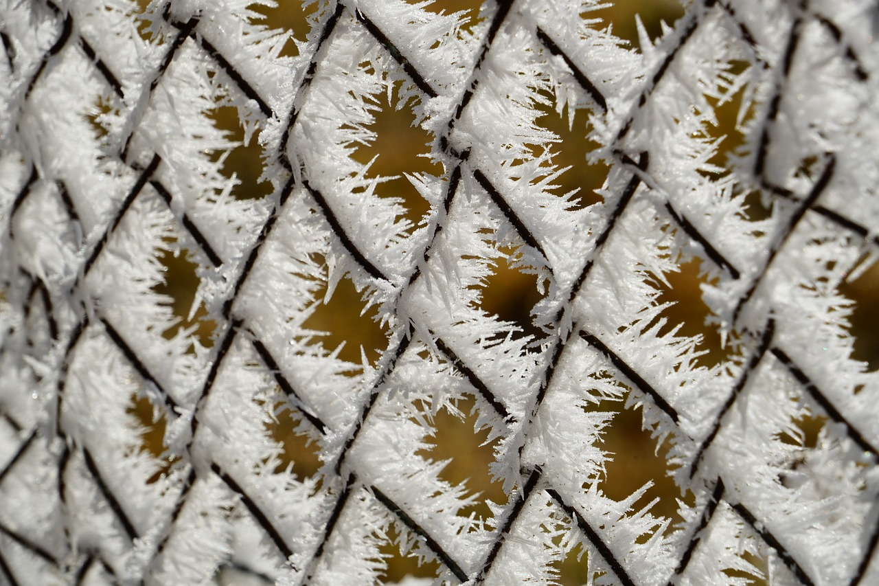 wire mesh fence fence hoarfrost free photo