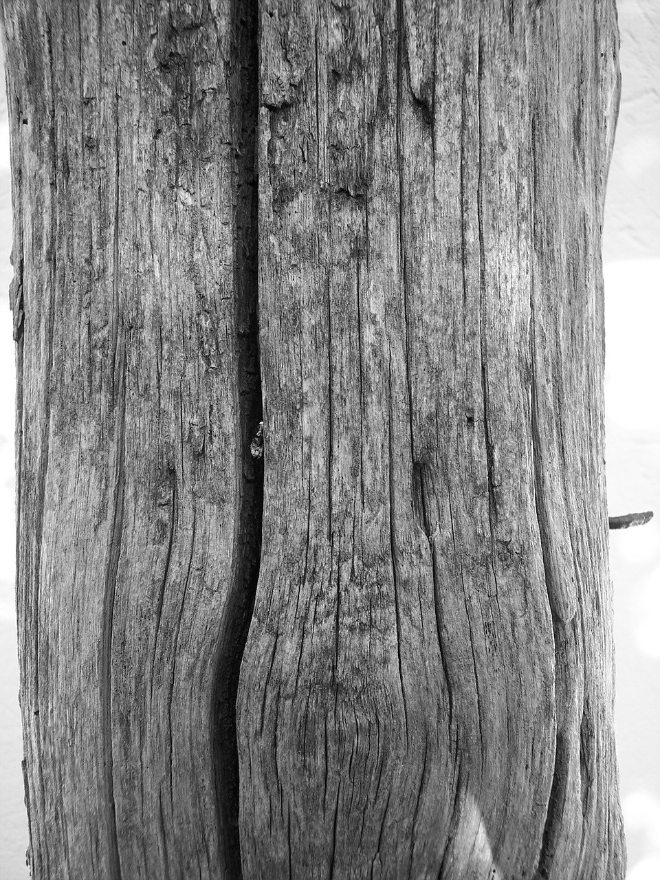 wood bw wooden poles free photo