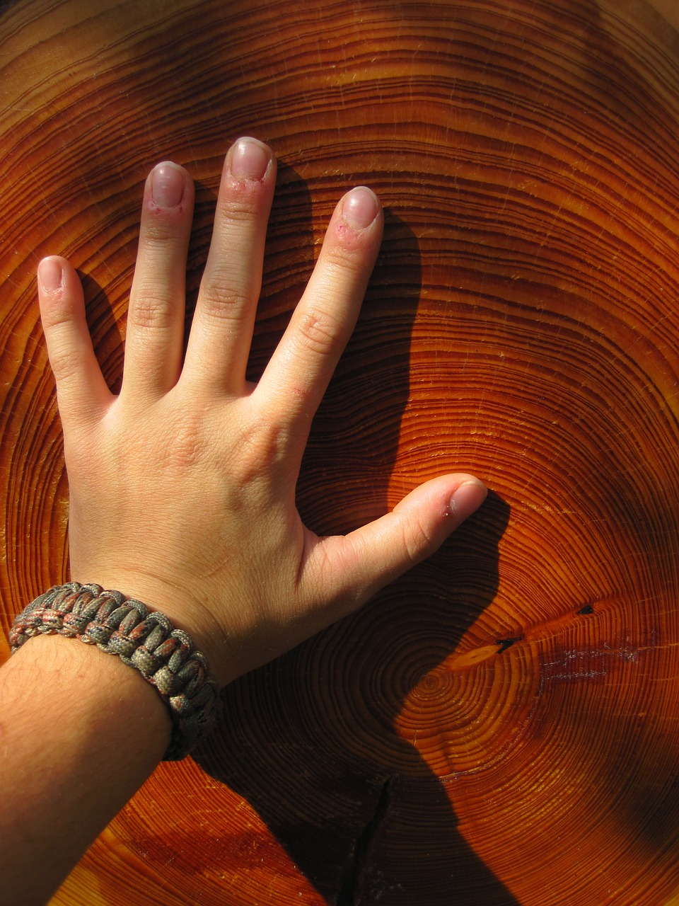 wood hand grain free photo