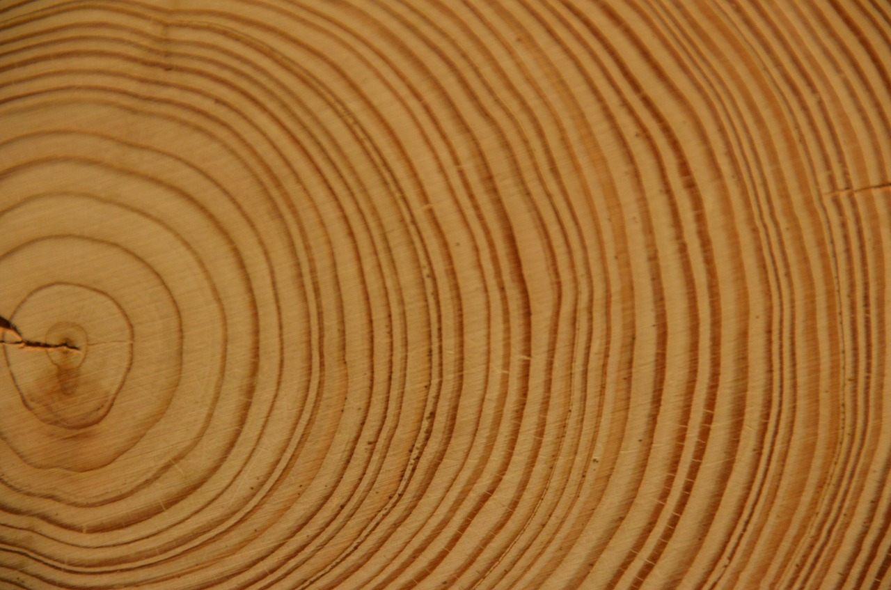 wood,annual rings,tree,log,strains,free pictures, free photos, free images, royalty free, free illustrations, public domain
