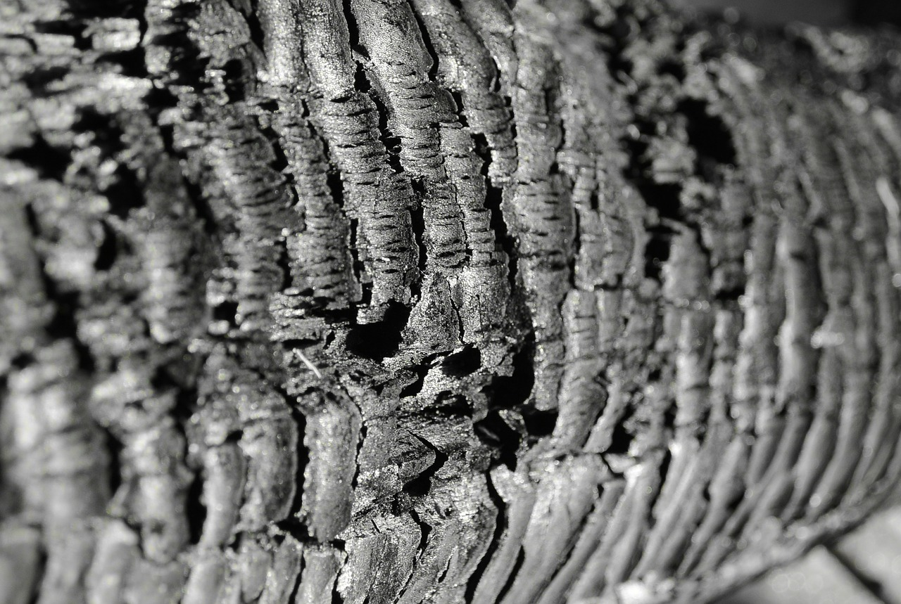 wood carbon structure free photo