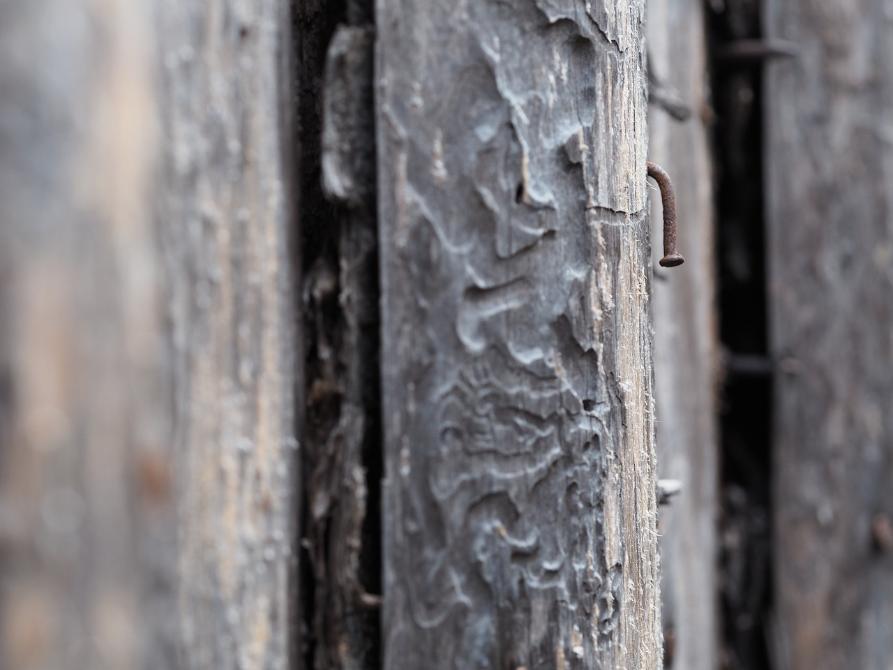 wood nature structure free photo