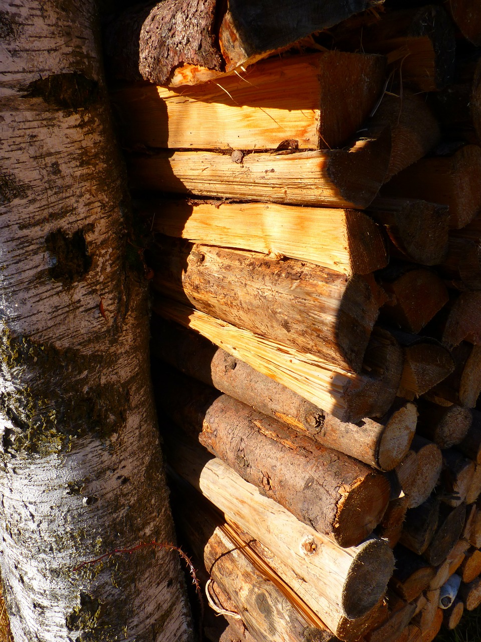 wood firewood log free photo