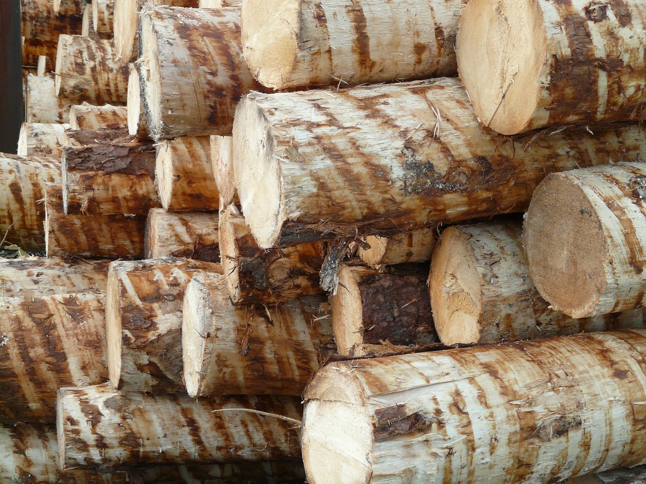 wood tree trunks timber free photo