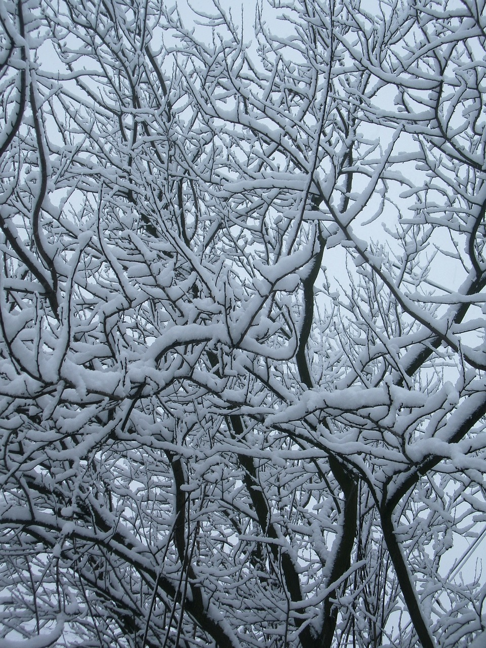 wood branches snow free photo