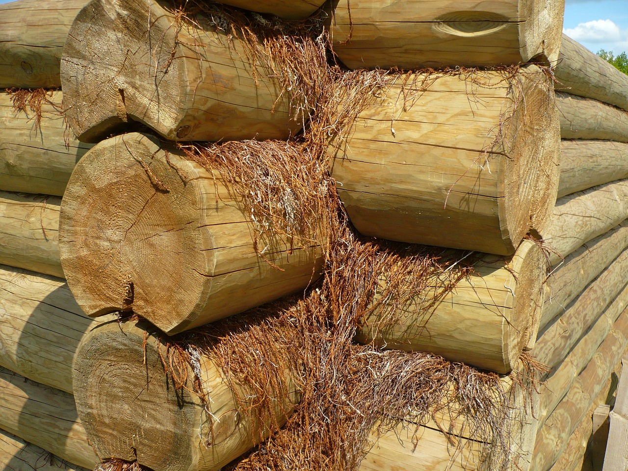 wood log logs free photo