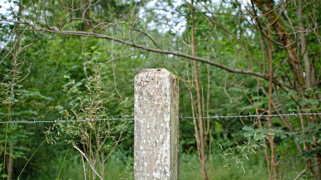 Wooden posts,post,barbed wire,fence,pasture - free photo from ...