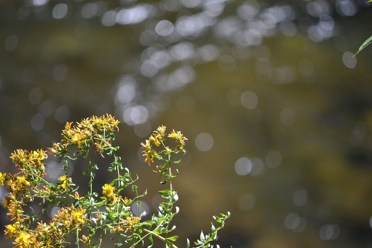 Yellowflowerwaterwildweed Free Photo From Needpix
