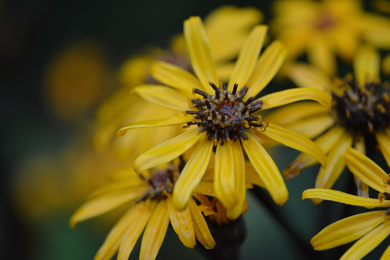 Yellowflowerplantplantsflowers Free Photo From Needpix
