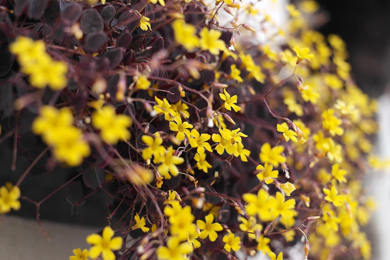 Yellow flowergardenflower gardensflowerspotted plant free yellow flowergardenflower gardensflowerspotted plantspring flowers mightylinksfo