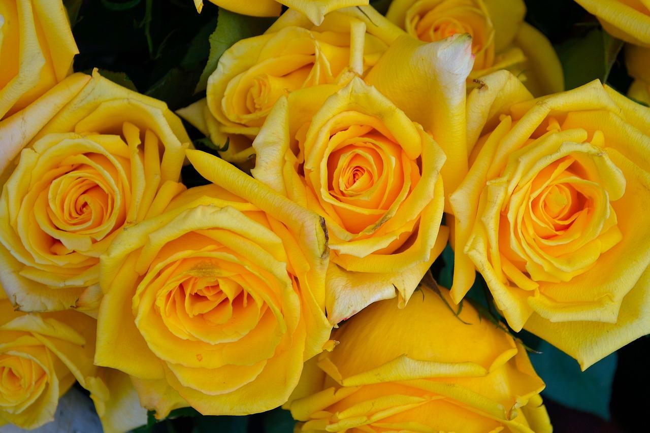 Yellow Rosesflowersfloralnaturerose Free Photo From Needpix