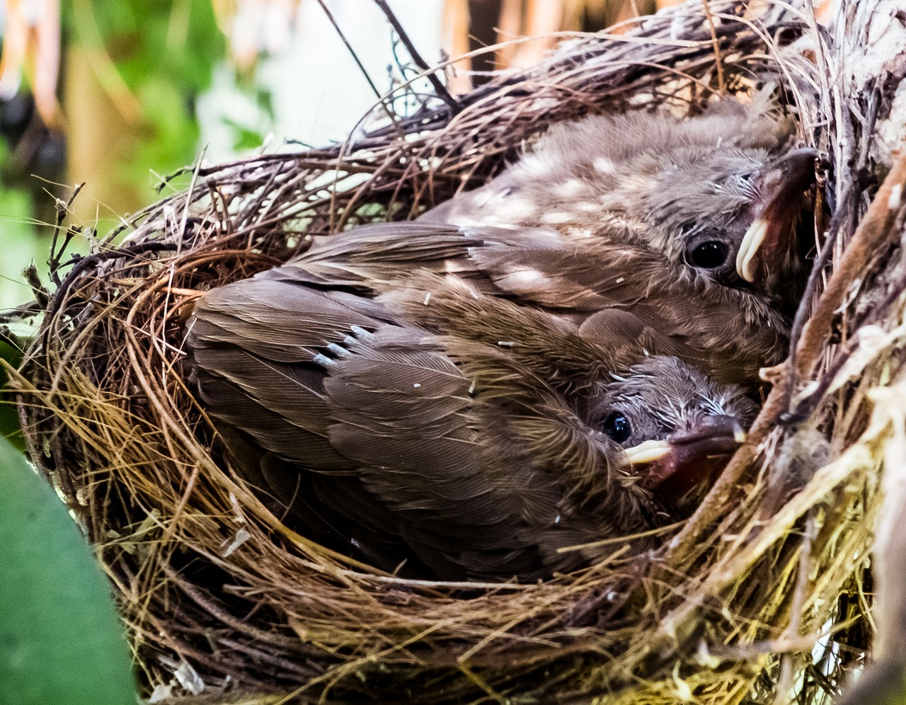 young birds birds nest free photo