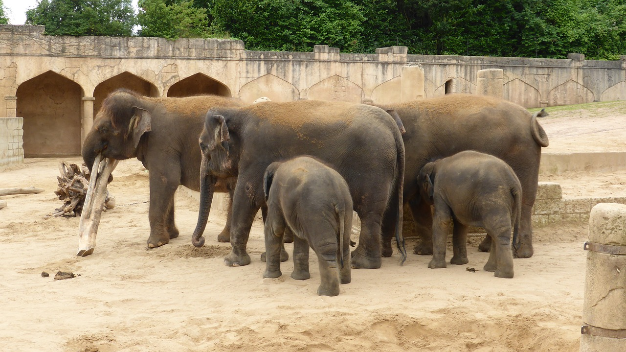 zoo hannover elephant adventure zoo free photo