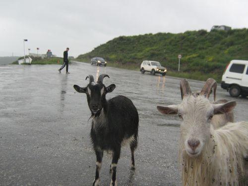 Roadside Beggars