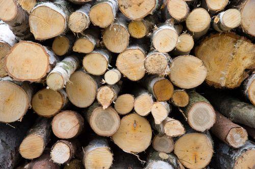 mediena, filialai, ruda, miškas, malkos, žievė, malkos