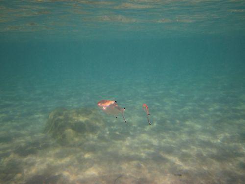 Sea Fish Underwater