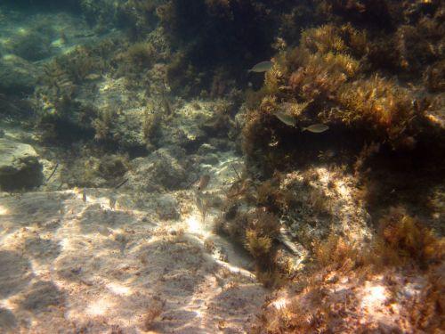 gyvūnas, giliai, pasinerti, žuvis, jūrų, gamta, vandenynas, Scuba, jūra, povandeninis, vanduo, laukiniai, laukinė gamta, povandeninė laukinė gamta