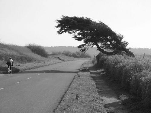 medis, vėjas, kranto, Krantas, lenkta, juoda, balta, medis pakrantėje