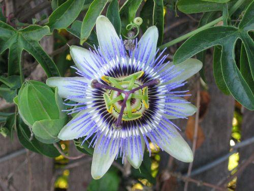 Bizarre Bloom