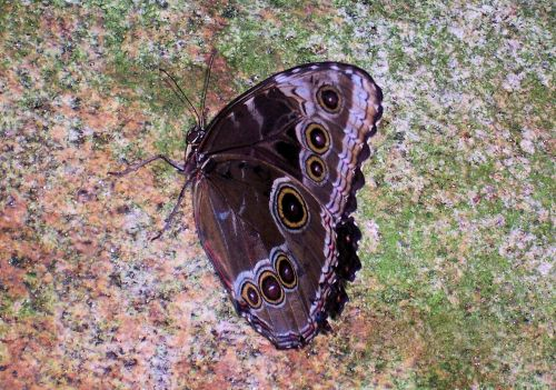 Butterfly Landed