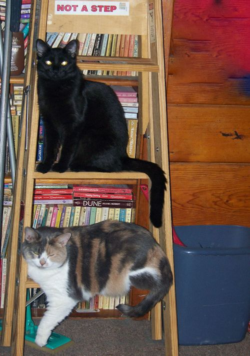 Cats On A Ladder